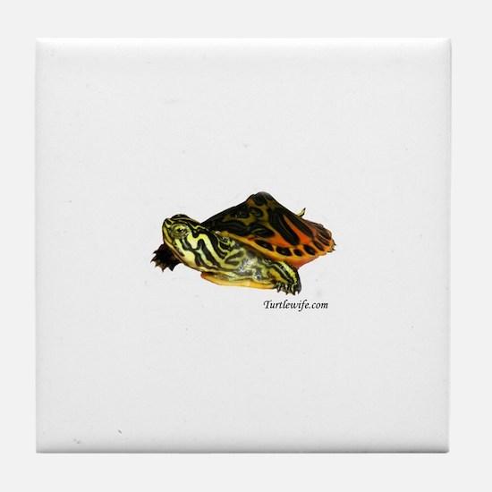 Hatchling Map Turtle Tile Coaster