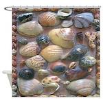 Vintage Shell Art Shower Curtain
