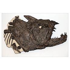 Xiphactinus fossil fish Poster