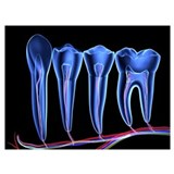 Dentistry Wrapped Canvas Art