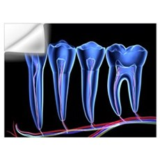Teeth, cross section Wall Decal