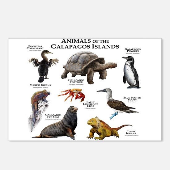Animals of the Galapagos Islands Postcards (Packag