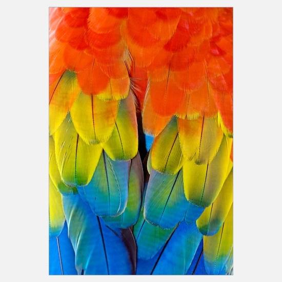 Scarlet macaw plumage