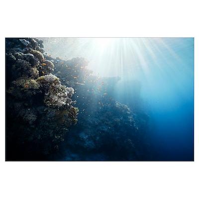 Reef scene Poster