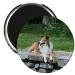 Watchdog Sheltie Photo Magnet Magnets