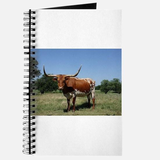 Longhorn cow Journal