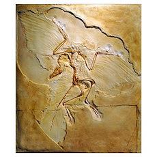 Archaeopteryx fossil, Berlin specimen Poster