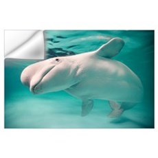 Beluga whale, Delphinapterus leucas Wall Decal