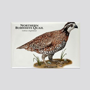 Northern Bobwhite Quail Rectangle Magnet