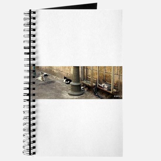 Yafo Street Cats 01 Journal