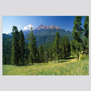Trees on a landscape, Pike National Forest, Colora