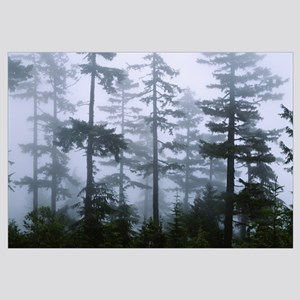 Silhouette of trees with fog in the forest, Dougla