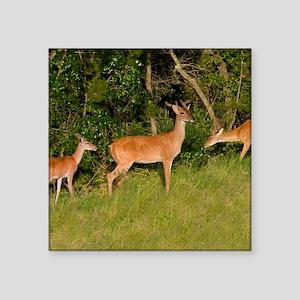 "American White Tail Deer Buck Square Sticker 3"" x"