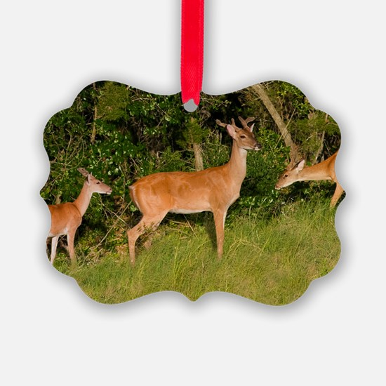 American White Tail Deer Buck Ornament