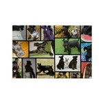 Black Schnauzer Collage Rectangle Magnet (100 pack