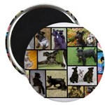 Black Schnauzer Collage Magnet