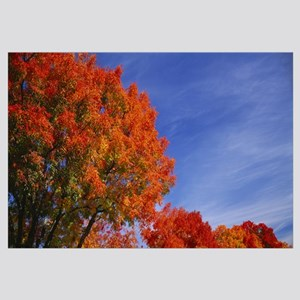 Low angle view of trees with red leaves, Rocklin,