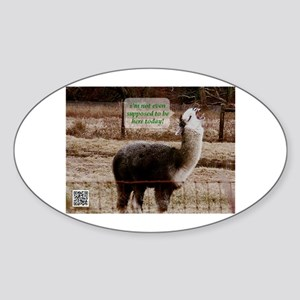 Clerks Drama Llama Sticker (Oval)