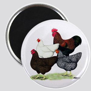 Plymouth Rock Chickens Magnet