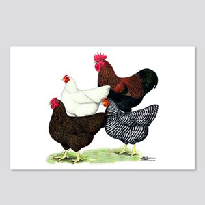 Plymouth Rock Chickens Postcards (Package of 8)