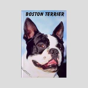 Boston Terrier Rectangle Magnet (10 pack)