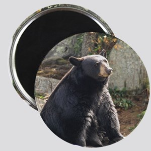 Black Bear Sitting Magnet