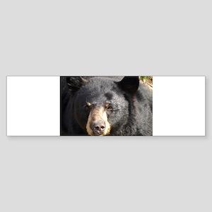 Black Bear Face Sticker (Bumper)
