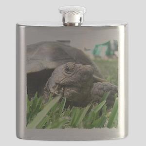 Helaine's Desert Tortoise Flask