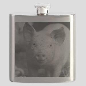 Chichi Flask