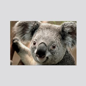 koala Rectangle Magnet
