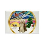 XmasMagic/Beardie #16 Rectangle Magnet (10 pack)