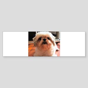 Shitzu Babie Sticker (Bumper)