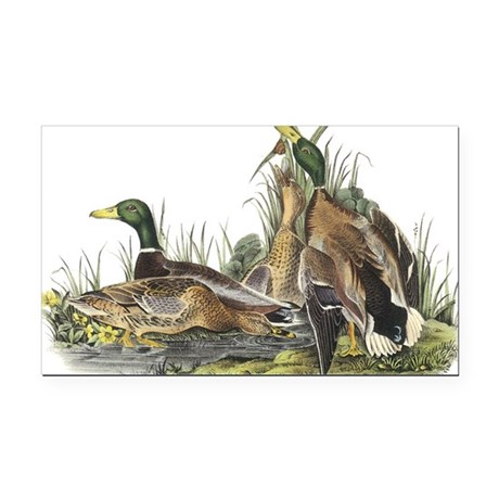 Mallard Duck Rectangle Car Magnet