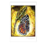 """""""Metamorphosis"""" Postcards (Package of 8)"""