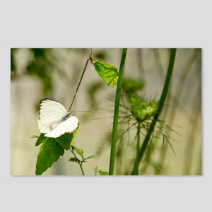 Butterfly Elegance Postcards (Package of 8)