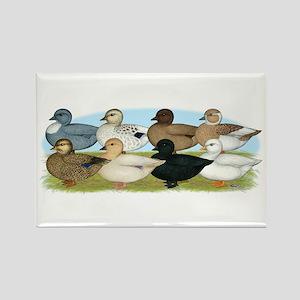 Eight Call Ducks Rectangle Magnet