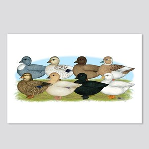 Eight Call Ducks Postcards (Package of 8)