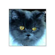 Exotic Blue Persian Cat Square Sticker 3