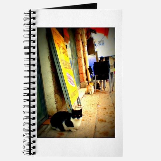Agrippas Cat 08 Lomo Journal