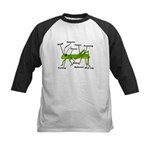 Grasshopper Anatomy Gails Kids Baseball Jersey