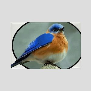 Bluebird in Oval Frame Rectangle Magnet