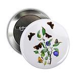 Butterflies of Summer 2.25