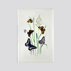 Butterflies of Summer Rectangle Magnet