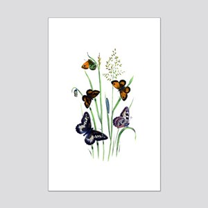 Butterflies of Summer Mini Poster Print