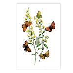 Butterflies of Summer Postcards (Package of 8)