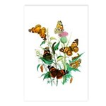 Butterflies of Summer Postcards (Package of 8)
