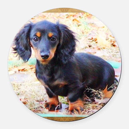 Puppy Love Doxie Round Car Magnet