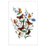 Butterflies of Summer Large Poster