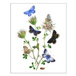 Butterflies of Summer Small Poster