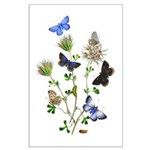 Butterflies of Summer Large Poster